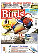Cage And Aviary Birds Magazine Issue 05/06/2019