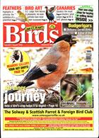Cage And Aviary Birds Magazine Issue 07/08/2019