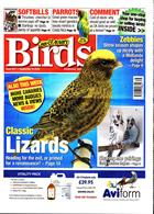 Cage And Aviary Birds Magazine Issue 18/09/2019