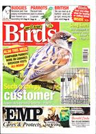 Cage And Aviary Birds Magazine Issue 20/11/2019