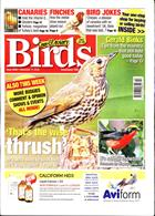 Cage And Aviary Birds Magazine Issue 11/12/2019