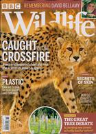 Bbc Wildlife Magazine Issue FEB 20