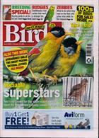 Cage And Aviary Birds Magazine Issue 19/02/2020