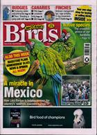 Cage And Aviary Birds Magazine Issue 29/04/2020