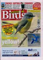 Cage And Aviary Birds Magazine Issue 28/10/2020