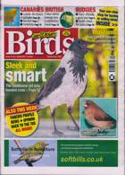 Cage And Aviary Birds Magazine Issue 16/09/2020