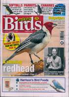 Cage And Aviary Birds Magazine Issue 11/11/2020