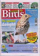 Cage And Aviary Birds Magazine Issue 25/11/2020