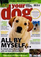 Your Dog Magazine Issue AUG 21
