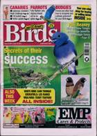 Cage And Aviary Birds Magazine Issue 16/06/2021