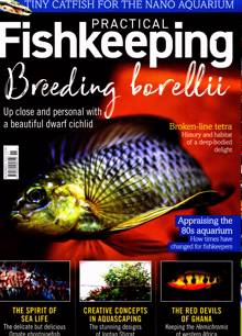 Practical Fishkeeping Magazine NOV 21 Order Online